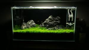 Aquascape Filter Iwagumi Aquascape Day 67 Youtube