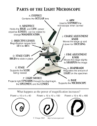 compound light microscope worksheet worksheets