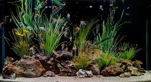 decoration tropical fish aquarium decoration themes how to create