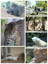 san diego zoo a southern california must see and get in free