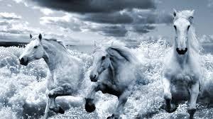 white mustang horse white horses alan cox youtube