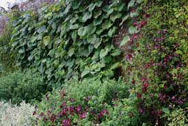 a lovely garden to visit in sussex growing nicely