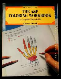 the a u0026p coloring workbook a complete study guide to anatomy by
