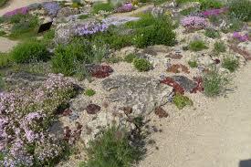 rock garden is riot of color at uw madison u2013 uwmadscience