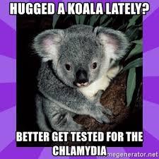 koala chlamydia meme mne vse pohuj