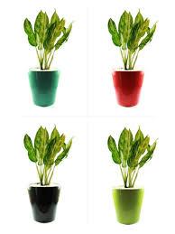 ceramic garden pot vintage terracotta flower pots plants floor