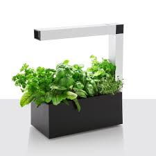 herbie indoor herb garden planter black herb gardens uk