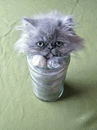 Cats In Small Spaces Video - 15 proofs that cats are liquids bored panda