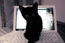 Cat Laptop Meme - computer kitty love meow