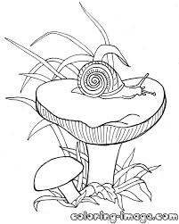 mushrooms russula with a snail free coloring pages for kids