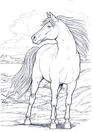90 coloring pages horses images coloring