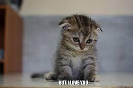 But I Love You Meme - but i love you sad kitten quickmeme