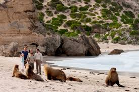 kangaroo island attractions u0026 tourism info south australia