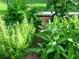 Types Of Community Gardens - types of common garden herbs