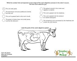 animal nutrition how cows eat grass and why we can u0027t a cow
