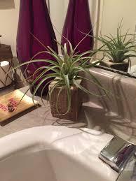 Air Plants Add Air Plants To Your Bathroom Frame My Mirror Blog