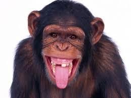 Funny Monkey Meme - create meme monkey monkey meme monkey funny monkey
