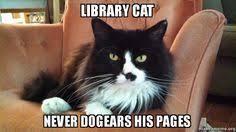 To Kill A Mockingbird Cat Meme - to kill a mockingbird cat meme kill best of the funny meme