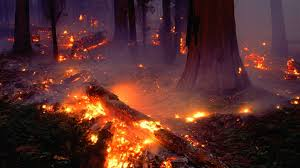 Wildfire Definition by Forest Fire Flames Tree Disaster Apocalyptic 23 Wallpaper