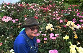 garden family kenosha man u0027s rose garden still growing strong local news