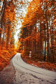 thanksgiving jigsaw puzzle 250 best fall winter holidays images on pinterest landscapes