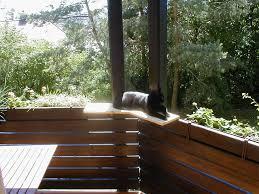balkon katzensicher machen balkon katzensicher machen tiere katzen spin de