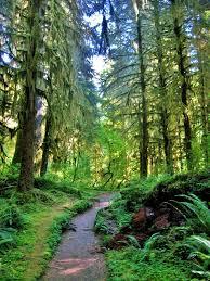 Washington forest images Best 25 olympic national forest ideas washington jpg