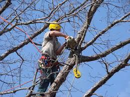 tree removal tree trimming stump tree service