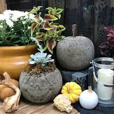 Home And Decorating Best 25 Pumpkin Garden Ideas On Pinterest Pumpkin Growing