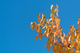 flora sky apk free free images tree nature branch blossom sky sunlight leaf