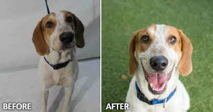 pets news tips u0026 guides glamour before and after why animal shelters need good photographers