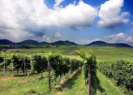 Bad Bergzabern Plz Urlaub Für Genießer Südliche Weinstraße