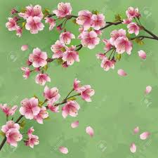Japanese Cherry Blossom Tree by Vintage Japanese Background With Sakura Blossom Japanese Cherry