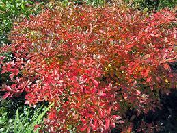 gatsbys gardens fall color trees