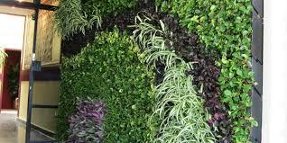 vertical garden delhi india green walls vertical garden company
