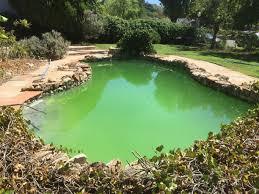 algar owner pool owner high cya and algae