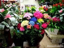 Wholesale Flowers Near Me Yangjae Flower Market Travellerelf