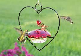 Jewel Box Window Hummingbird Feeder All Hummingbird Feeders