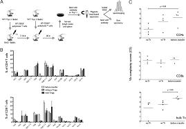 cd4 cd25 foxp3 regulatory t cells optimize diversity of the