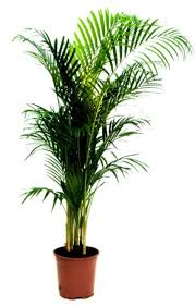 10 air purifying plants for homes u0026 offices busy city plants