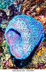 Strawberry Vase Sponge Vase Sponges Stock Photos U0026 Vase Sponges Stock Images Alamy