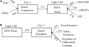 Sleep Number Bed Uneven Fear Conditioning Safety Learning And Sleep In Humans Journal