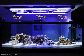 Refugium Light Day 240 My 400g Reef Turns 8 Months Old Today Blogs Reef Addicts