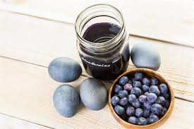 blueberry interesting facts about the native plant of north america