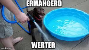 Ermahgerd Meme Maker - image tagged in funny ermahgerd imgflip