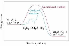 chemistry the central science chapter 14 section 6