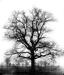 etsah eryah bare trees nobody does it quite like us