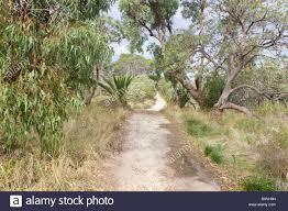 native plants western australia a sandy path through native bushland including zamia eucalypt