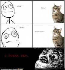 Rage Meme Comics - image cat rage meme comics jpg adventure time wiki fandom