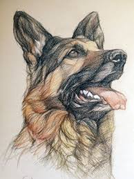 best 25 awesome drawings ideas on pinterest animal drawings